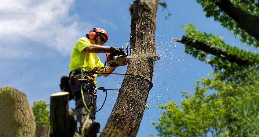 veszélyes fakivágás