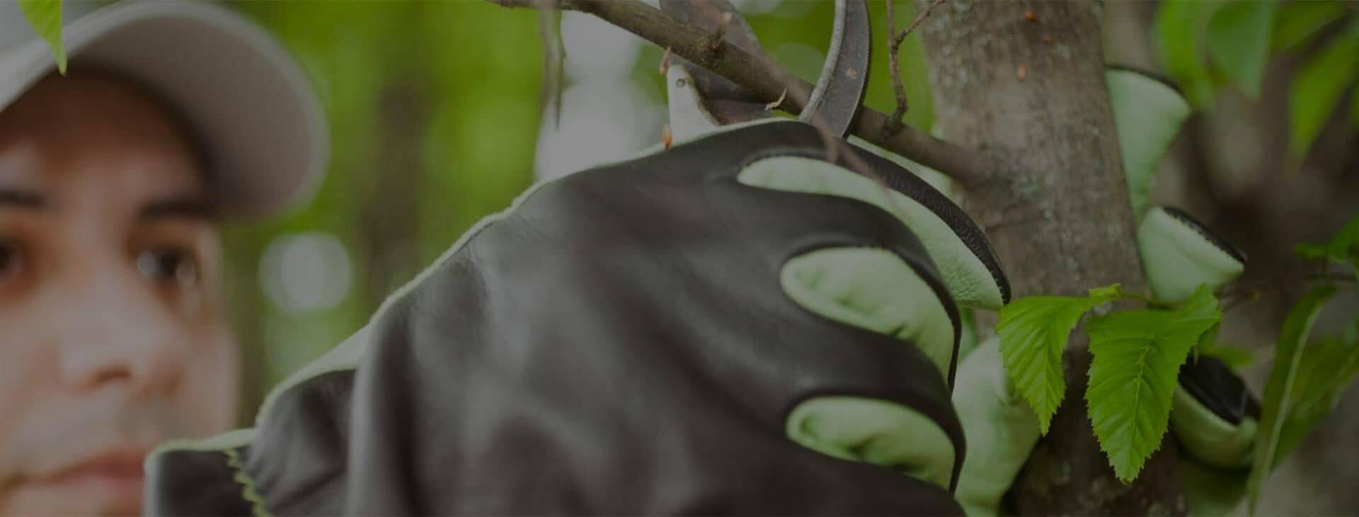 Zöldhulladék elszállítás<br /> Bokrok, ágak, gallyak elszállítása<br /> INGYENES HELYSZÍNI FELMÉRÉS!